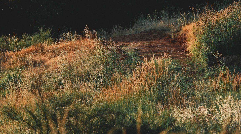 Dusk Meadow